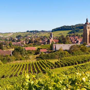 Jura for home page -vignoble