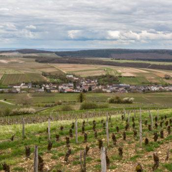 sancerre pinard vineyard